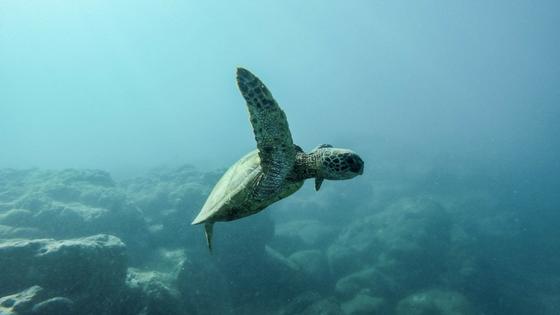 reducing-plastic-buengo-turtle-marine life